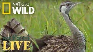 Safari Live - Day 68 | Nat Geo Wild