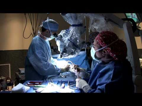 Bone Graft Substitutes for Spine Surgery