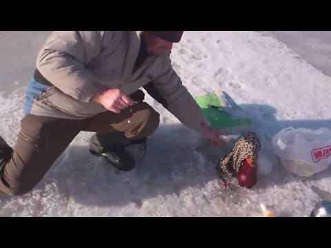 весенняя рыбная ловля  в азове