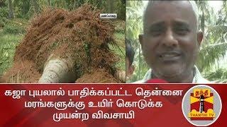 கஜா புயலால் பாதிக்கப்பட்ட தென்னை மரங்களுக்கு உயிர் கொடுக்க முயன்ற விவசாயி   Cyclone Gaja