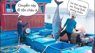Cận Cảnh Cá Ngừ Đại Dương | Cuộc Sống Biển Đông | DEGO TV