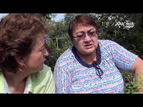 Как посадить розу Заглублять прививку или нет  Консультант Р М Бабарико Music Videos