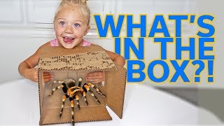 EXTREME WHAT'S IN THE BOX CHALLENGE!!!