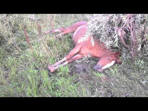 спасение лошадки