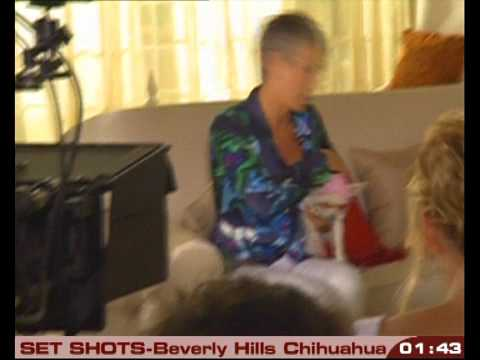 set shots - BEVERLY HILLS CHIHUAHUA