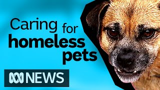 Volunteer vet teams taking care of the pets of homeless & vulnerable people | ABC News