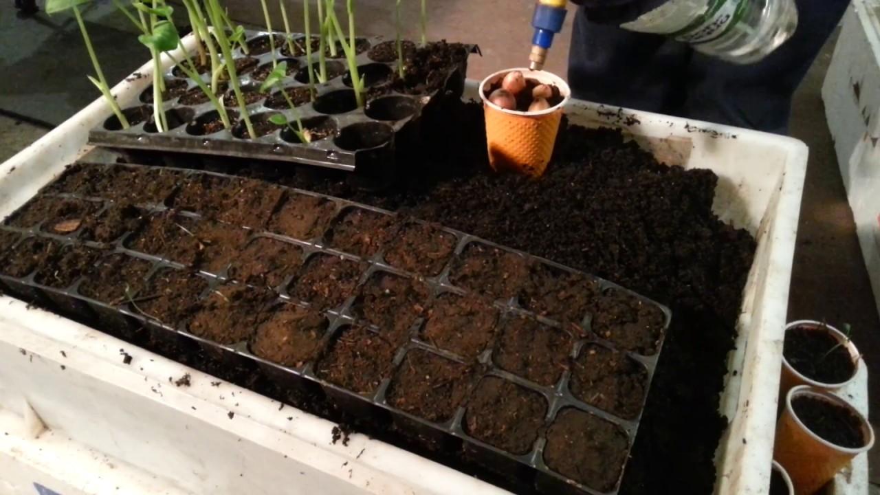 Выращивание земляных червей в домашних условиях 75