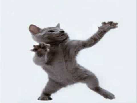 Cat Dancing To Hamster Dance video