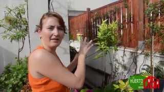 El huerto en casa 60 frutales