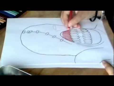 Dibujando a Nemesis RESIDENT EVIL