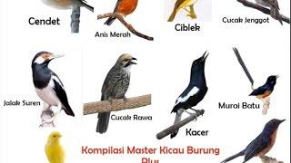 Download Lagu Kompilasi Masteran Kicau Burung dan Suara Kricikan Air Durasi Panjang Gratis STAFABAND