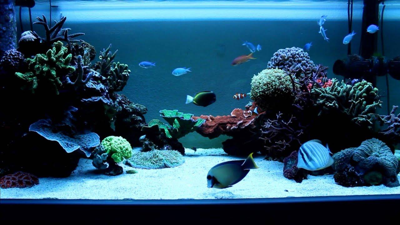 aquarium eau de mer 60l