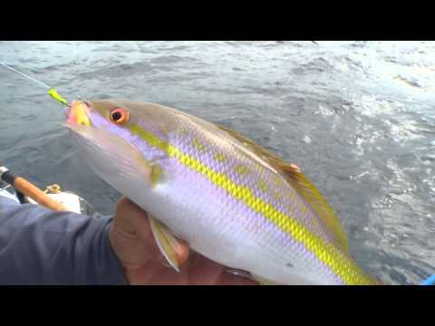 Yellowtail Snapper Fishing is Favorite for Florida Keys Skipper