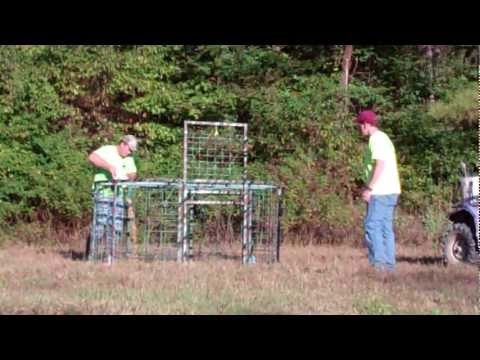 How to trap wild hogs using the fastest, safest, easiest and most effective hog trap!