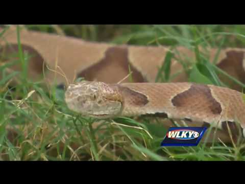Woman bitten by poisonous snake while hiking in Jefferson County