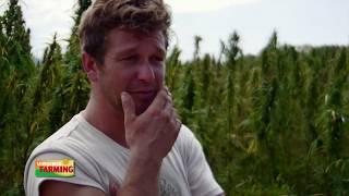 Virginia Farming: Industrial Hemp Trials