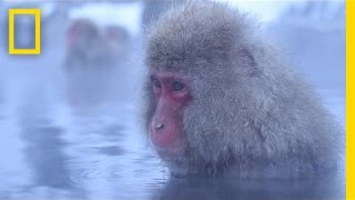 Meditative Snow Monkeys Hang Out in Hot Springs | Short Film Showcase