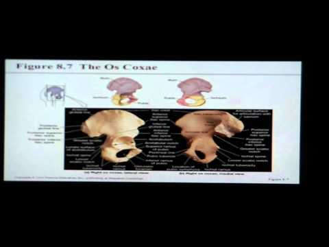 Anatomy and Physiology Help: Chapter 8 Appendicular Skeleton