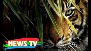 Những vụ trả thù kinh hoàng và thảm khốc nhất mà động vật hoang dã dành cho con người