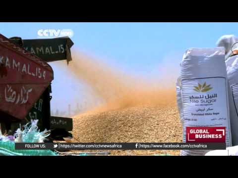 Egypt's gov't to adopt world standard for ergot in wheat imports