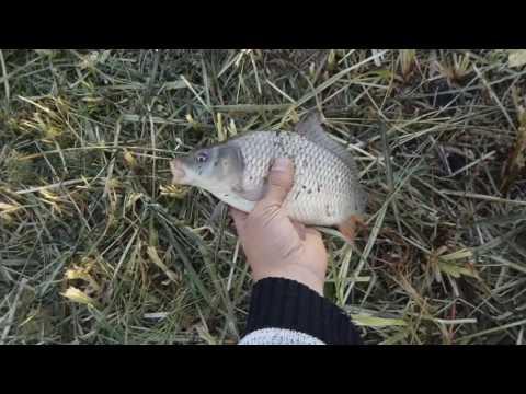 платная рыбалка в кондрыкино