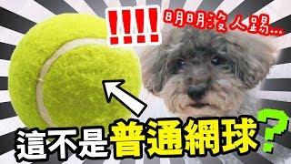 【整蠱狗狗】當MUFFIN看見網球自己「突然會動」!?靈異事件嗎…