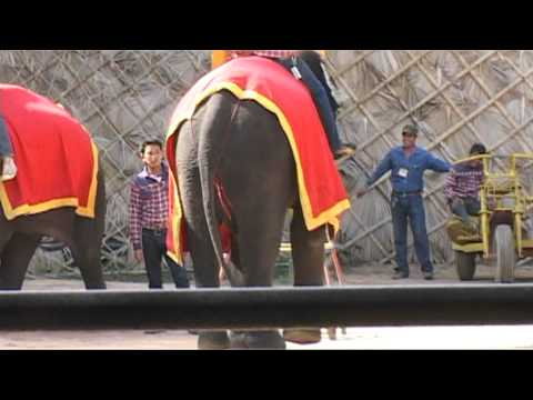 Thai Elephants Show | TravelLog