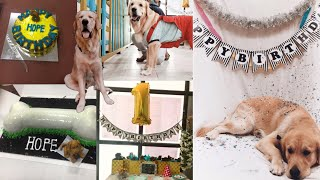 How To Throw An Amazing Dog Birthday Party| My Dog Turns 1 🐾
