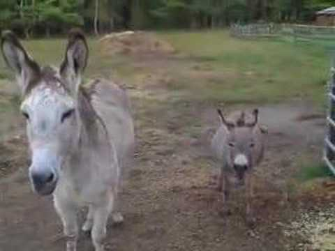 The donkeys have something to say to you.