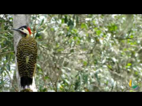 Uruguay, Rocha Travel - San Miguel stream, nature and birdwatching. Enjoy the boat ride!