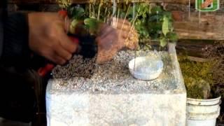 Propagación de Plantas - Vivero Guacolda