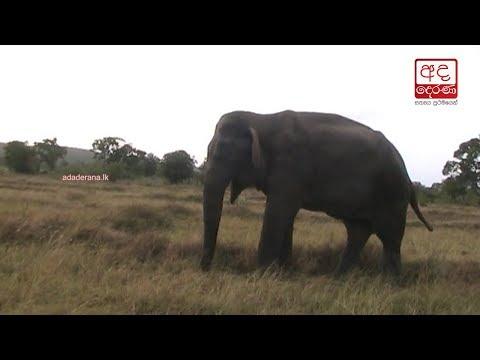 blind and deaf eleph|eng
