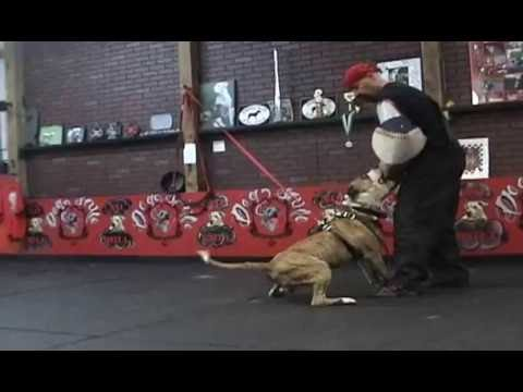 Schutzhund Protection Training...Vernon Hills,IL part 3...9-1-2012