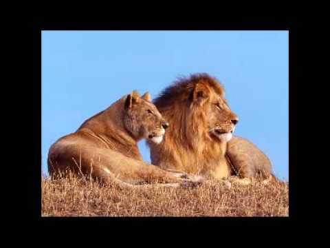 African Rhumba Groove Mix 2   YouTube