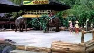 download lagu Elephants Show - Taman Safari Bogor Indonesia gratis