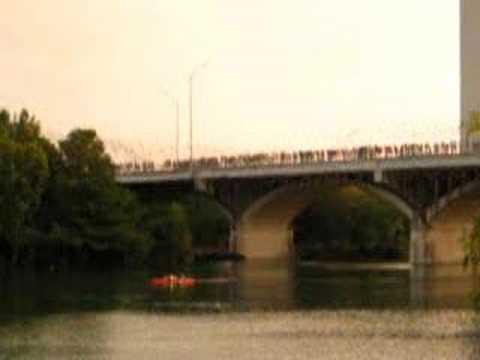 South Congress Bridge Bats