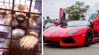 2-Month-Old Lion Cub Found Inside Lamborghini During Traffic Stop