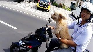 Bikers VS Animals - Let's Ride! [Ep.#05]