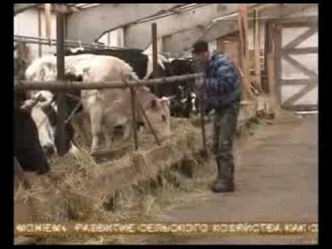 Поддержка семейных животноводческих ферм