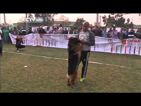Egypt's Hosts Dog Competition to Find Best of Breeds