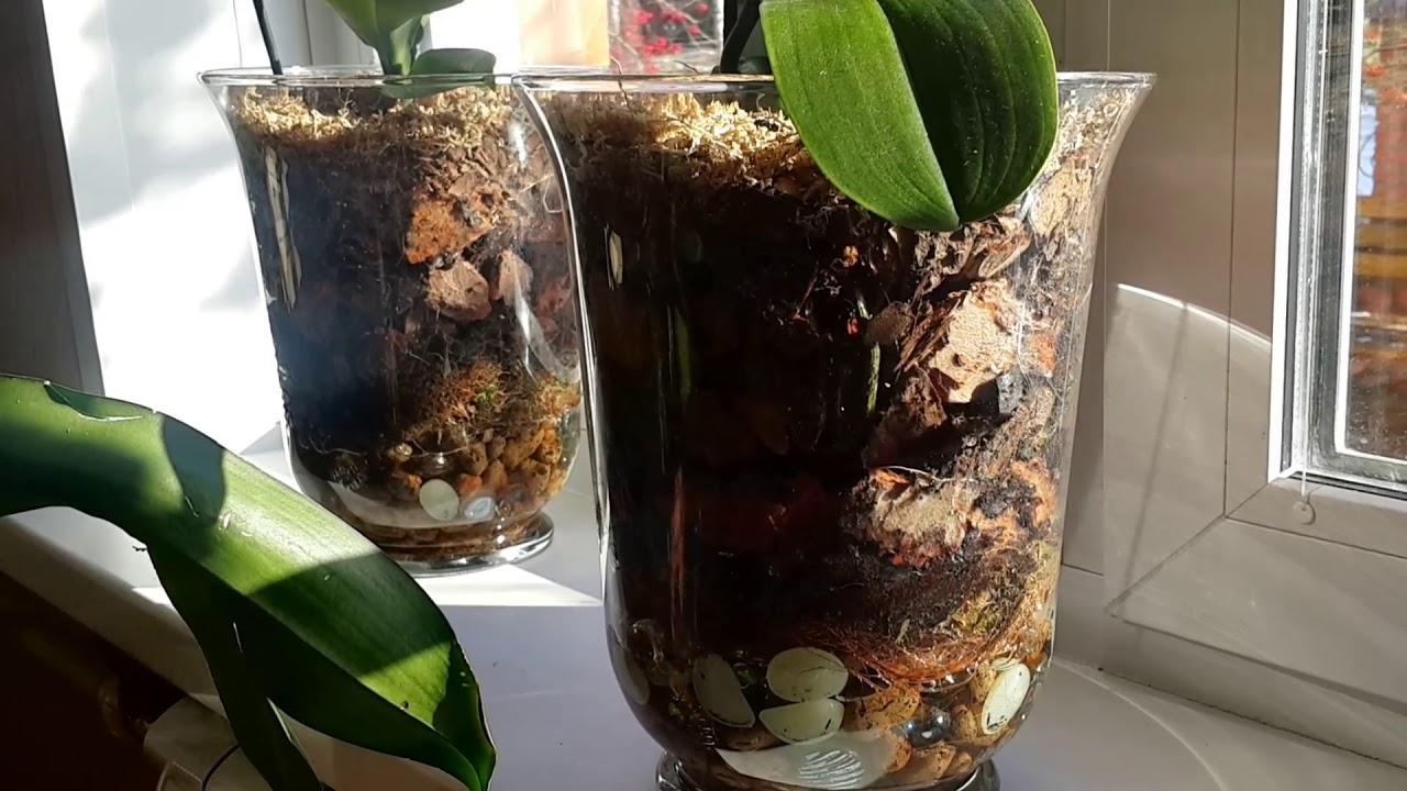 Сажать орхидею в стеклянный горшок 72