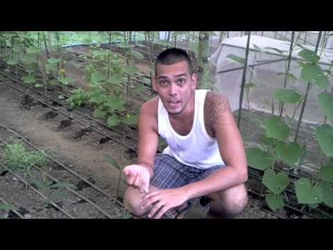 Organic Farming in the Philippines (why we need to weed)