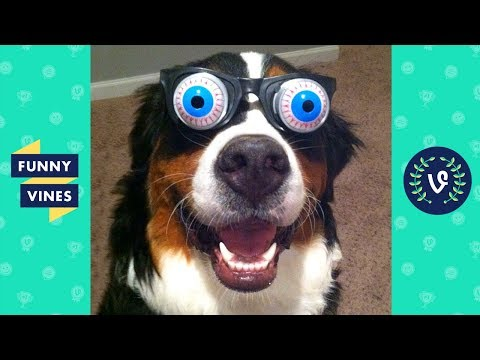 Funny Animals Videos Compilation 2018 - Best Pet Videos | Funny New Vines V2