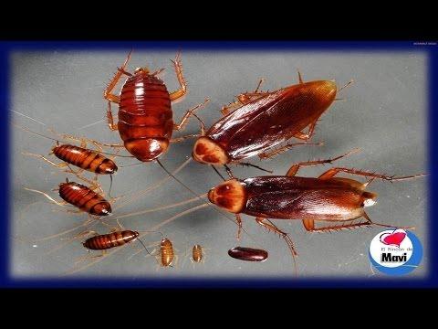 Como eliminar las cucarachas - Como acabar con las hormigas en el jardin ...