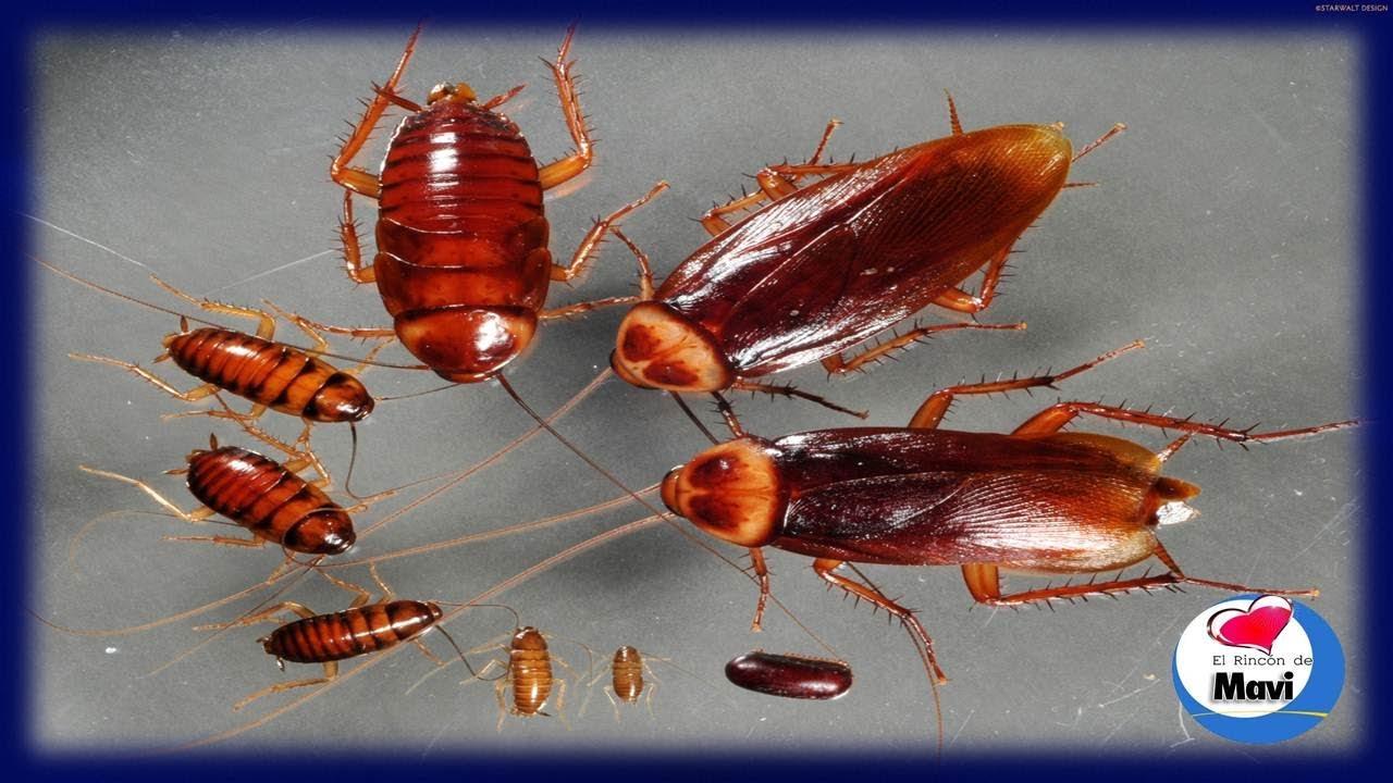 Eliminar hormigas de la cocina top mata a las hormigas - Como eliminar las hormigas de la cocina ...