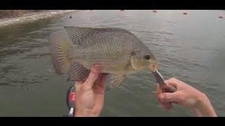 GIANT Tilapia Fishing with Nightcrawlers: GoPro Hatcam