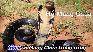 Nhạc Chế 2018 - Các Loài Rắn Độc Nhất Việt Nam - Tuyệt Phẩm Nhạc Chế