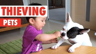 Thieving Pets | Funny Pet Video Compilation
