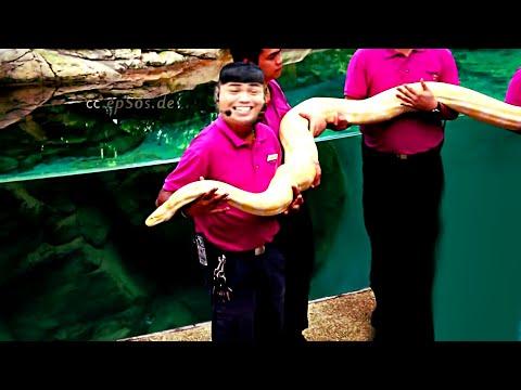 Amazing Animal Show in Singapore Zoo