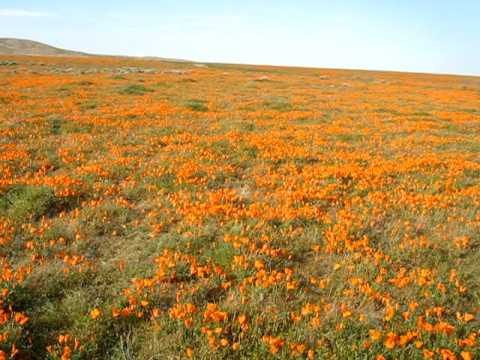 Quick Pan near California Poppy Reserve